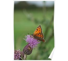 Small Copper Poster