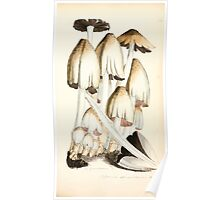 Coloured figures of English fungi or mushrooms James Sowerby 1809 0485 Poster