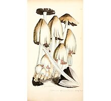 Coloured figures of English fungi or mushrooms James Sowerby 1809 0485 Photographic Print