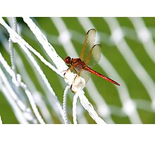 World Cup Dragonfly Photographic Print