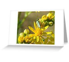 Little Green Bug on Ragwort Greeting Card