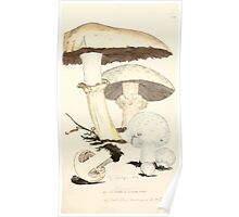 Coloured figures of English fungi or mushrooms James Sowerby 1809 0831 Poster