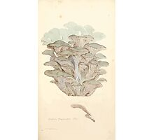 Coloured figures of English fungi or mushrooms James Sowerby 1809 0233 Photographic Print