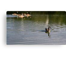 Canada Goose,Par duck pond,Cornwall Canvas Print