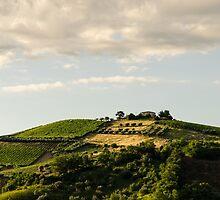 Italy - Countryside  by Andrea Mazzocchetti