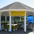 Gazebo for Sunflowers for Make A Wish.... by Debbie Robbins