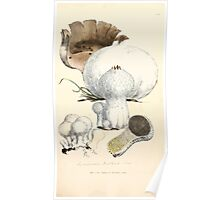 Coloured figures of English fungi or mushrooms James Sowerby 1809 0887 Poster