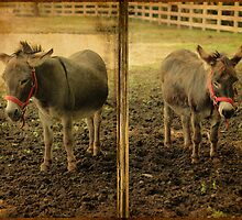 The Donkeys by Aaron Campbell