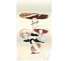 Coloured figures of English fungi or mushrooms James Sowerby 1809 0833 Poster