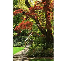 A Walk In Lithia Park Photographic Print