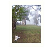 Bow Hill, River land, Murry river, South Australia Art Print