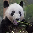 Would you like some bamboo? by Rick Montgomery
