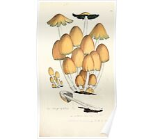 Coloured figures of English fungi or mushrooms James Sowerby 1809 0745 Poster