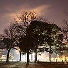 Misty by Zoomantics