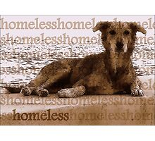 The Vacant Eyes of the Homeless Dog Photographic Print