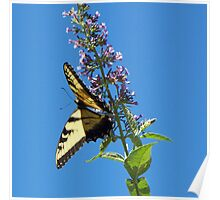 Sunny Swallowtail Poster
