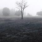 Winter's morning by spiritoflife