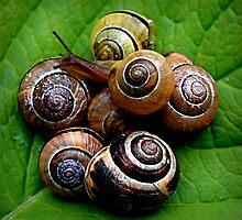 Gang of Snails by clare scott