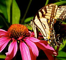 Butterfly Rests on Pink Flower by hcorrigan