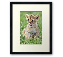 Where's my mummy? Framed Print