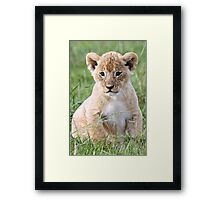 Where's my mummy? II Framed Print