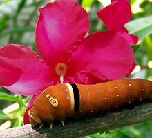 Caterpillar and Flower by Penny Odom