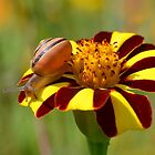Snail in the Garden 2 by relayer51