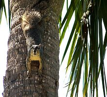 Squirrel on a Palm Tree by Penny Odom