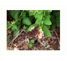 Butterfly on Lantana Bush Art Print
