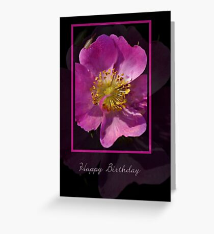 Happy Birthday - Pink Flower on Black Background Greeting Card