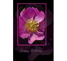 Happy Birthday - Pink Flower on Black Background Photographic Print