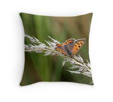 Small copper (Lycaena phlaeas) Throw Pillow