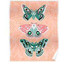 Lepidoptery No. 3 by Andrea Lauren  Poster