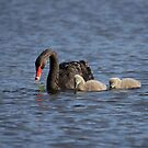 Black Swan ... motherhood by Kerryn Ryan, Mosaic Avenues