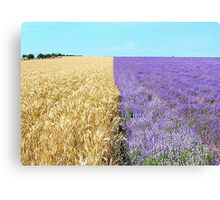 The big season of a lavender 1. Fields of Ukraine.   Canvas Print