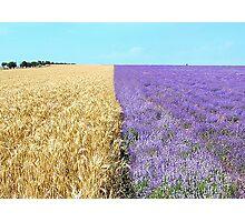 The big season of a lavender 1. Fields of Ukraine.   Photographic Print
