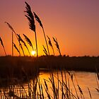 Reeds in the Sunset by Kathy Wright