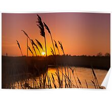 Reeds in the Sunset Poster