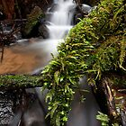 Wonwondah Falls by Travis Easton