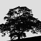 Tree Silhouette  by Aggpup