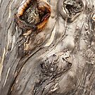 Picasso Snow Gum by NickMonk