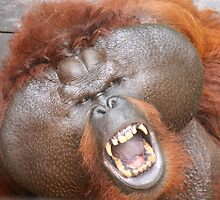 Aman the orang utan #2 by Denzil