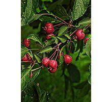 Sour Cherries Photographic Print