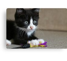 Fun with feathers II Canvas Print