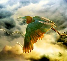 Beating the Storm by Stephen Warren