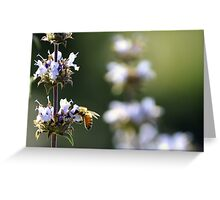 Bee Collecting Pollen From Flower Greeting Card