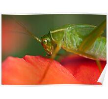 The Grasshopper Poster