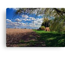 Willow by Corn Field in the Fall Canvas Print