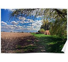 Willow by Corn Field in the Fall Poster
