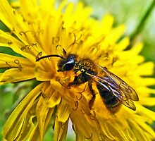 The Wasp and the Dandelion by Paul Hickson